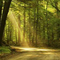 Onderwijs: Eenheid in geest, ziel en lichaam
